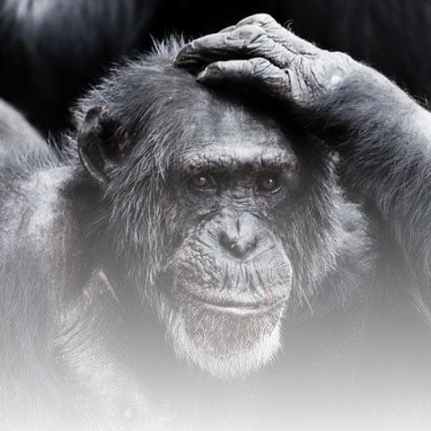 L'intellect humain est-il voué à l'affaiblissement?