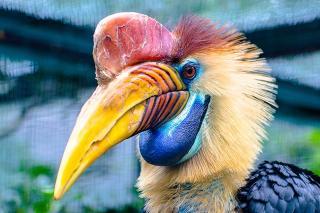 ExoticBird