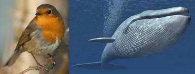 Oiseau-Baleine