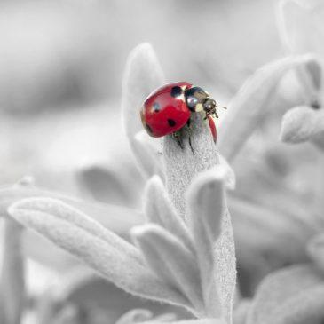 imaginaire technologique: l'insecte attendait son heure